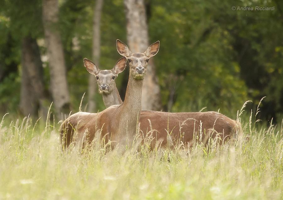 Caccia Fotografica - Photographic hunting