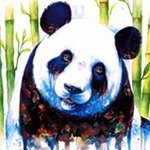 Giacomo Il Panda Russo